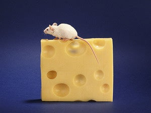 swiss cheese mouse holes