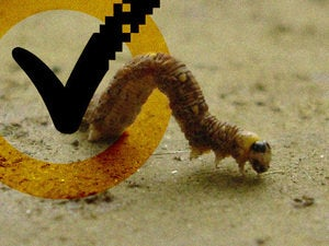 worms virus symantec