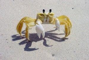 It's a crab.